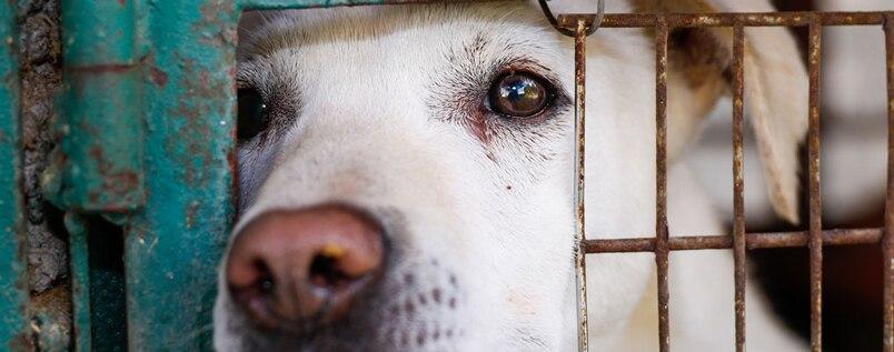 amanti degli animali sito di incontri Australia 50 centesimi di datazione armeno